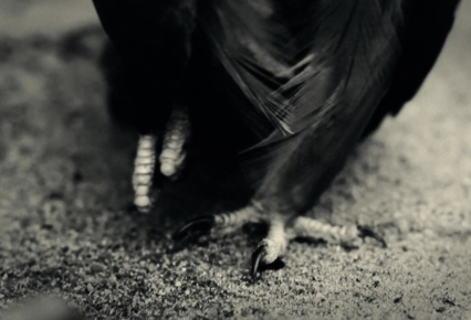 ääreläinen-still-jalat